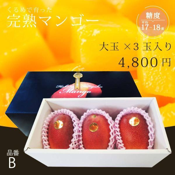 【品番B】大玉×3玉入り くるめで育った完熟マンゴー|kurashige-nouen