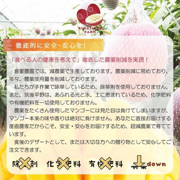 【品番E-3】特特大玉×3玉入り くるめで育った完熟マンゴー|kurashige-nouen|05