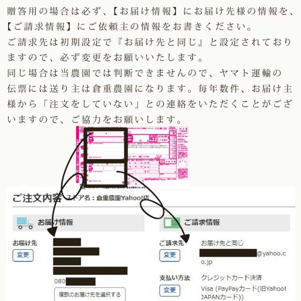 【品番H】中玉×5〜6玉入り くるめで育った完熟マンゴー|kurashige-nouen|04