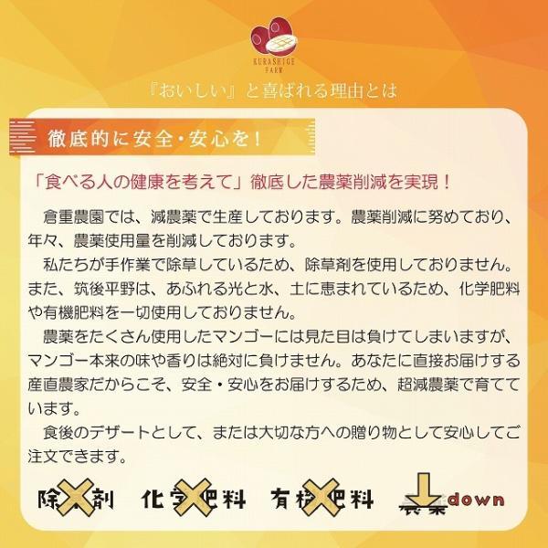 【品番I-35】特特大玉×1玉入り くるめで育った完熟マンゴー|kurashige-nouen|02