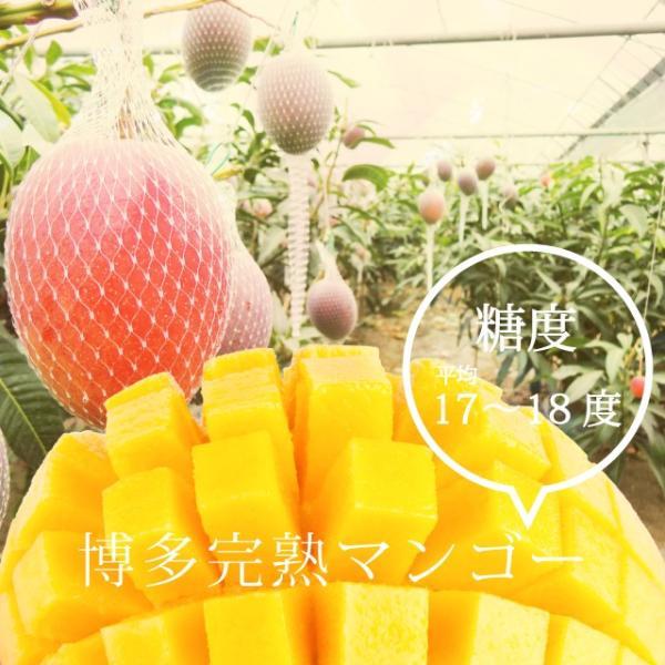 【品番I-35】特特大玉×1玉入り くるめで育った完熟マンゴー|kurashige-nouen|03