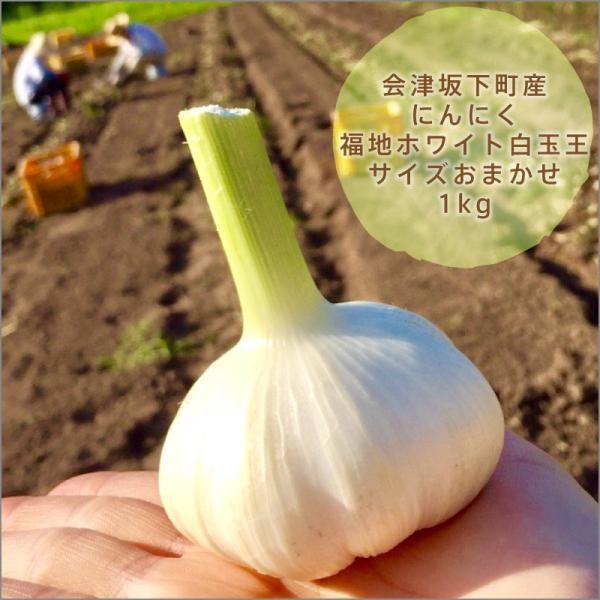 会津坂下町産にんにく:白玉王(1kg)|kuriki-farm