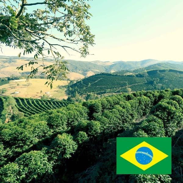コーヒー豆<ブラジル・サンタイネス農園ナチュラル[100g]>|kuriyacoffee