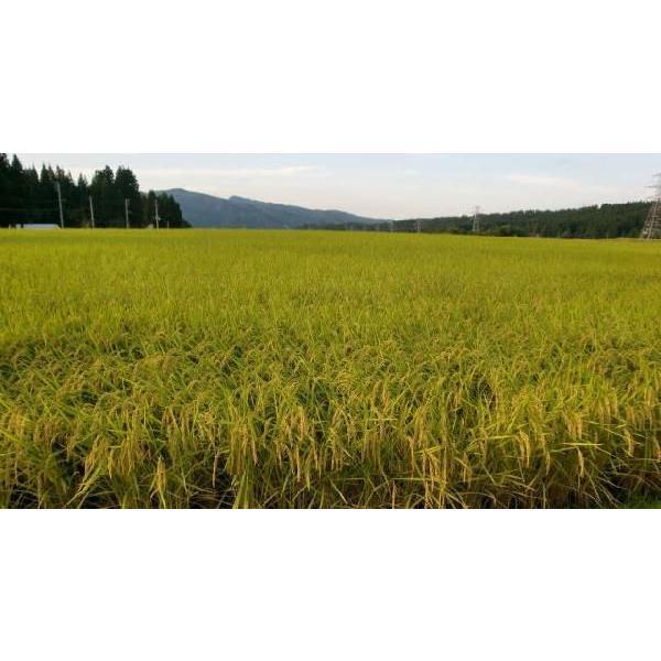 新米 米 10kg 30年 魚沼産コシヒカリ 白米 特別栽培米 最高級の お米(発送は10/8日頃から)|kuwaharasyoten|03