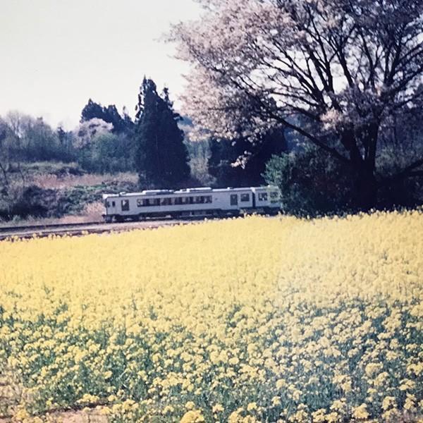 菜種油 国産 無添加 昔ながらの圧搾製法 福島県産なたね油 1,650g|kyodoseiyu|02