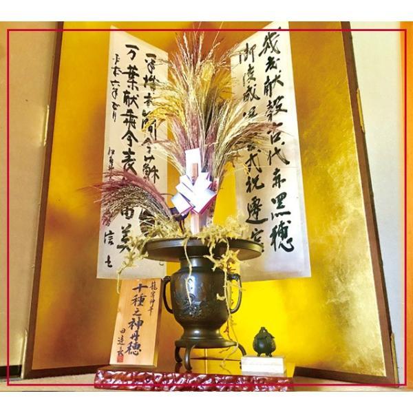 古代 赤米 500g 元伊勢籠神社奉納米 メール便 全国送料無料 タイムセール 安い|kyomaido|06