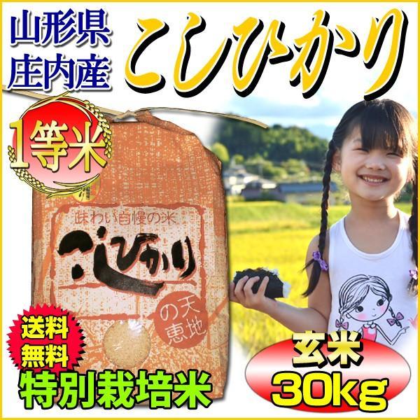 お米 コシヒカリ 玄米 30kg 山形県庄内産 一等米 特別栽培米 5kg×6袋 送料無料 令和2年産 タイムセール 安い