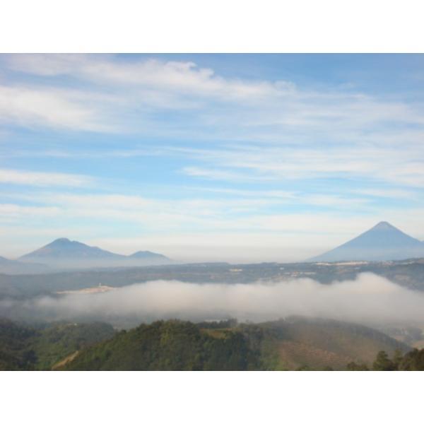コーヒー豆 100g Cup of Excellence  グアテマラ リオ・アリバ 農園|kyoto-coffee|04
