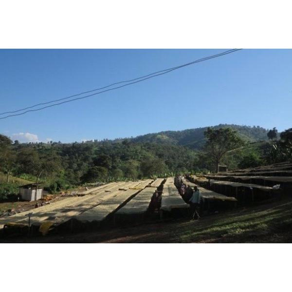 コーヒー豆 100g  デカフェ-カフェインレス- エチオピア モカシダモ|kyoto-coffee|02