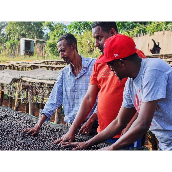 コーヒー豆 250g エチオピア グジ フローラルや柑橘の風味|kyoto-coffee|02