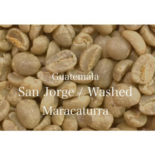 コーヒー生豆 100g グアテマラ サンホルヘ農園  マラカトゥーラ種|kyoto-coffee