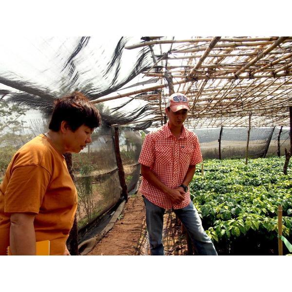 コーヒー生豆 100g グアテマラ サンホルヘ農園  マラカトゥーラ種|kyoto-coffee|03
