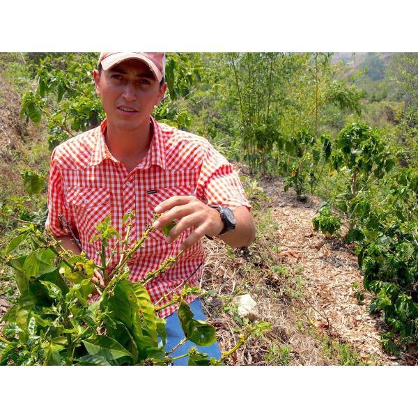 コーヒー生豆 100g グアテマラ サンホルヘ農園  マラカトゥーラ種|kyoto-coffee|04