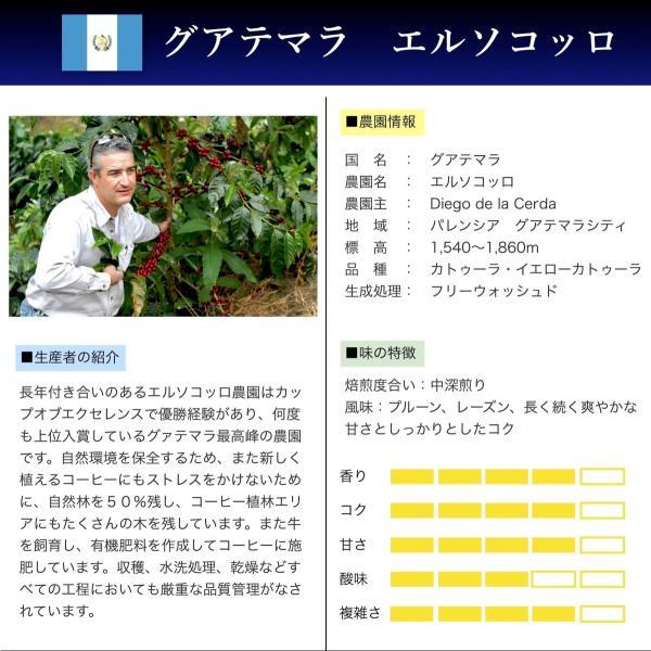 コーヒー豆  100g グアテマラ エルソコッロ 持続するさわやかな甘み|kyoto-coffee|02