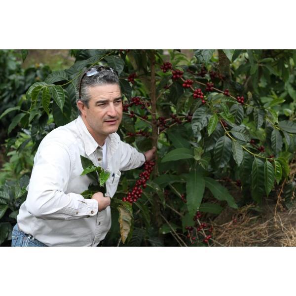 コーヒー豆  100g グアテマラ エルソコッロ 持続するさわやかな甘み|kyoto-coffee|06