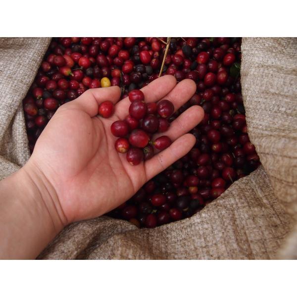 ≪今月の2割増量豆≫コーヒー豆 100g ホンジュラス エルサウセ |kyoto-coffee|05