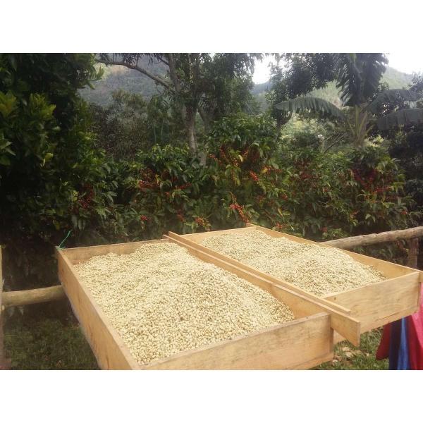コーヒー豆 250g ニカラグア ラスプロメサス |kyoto-coffee|03