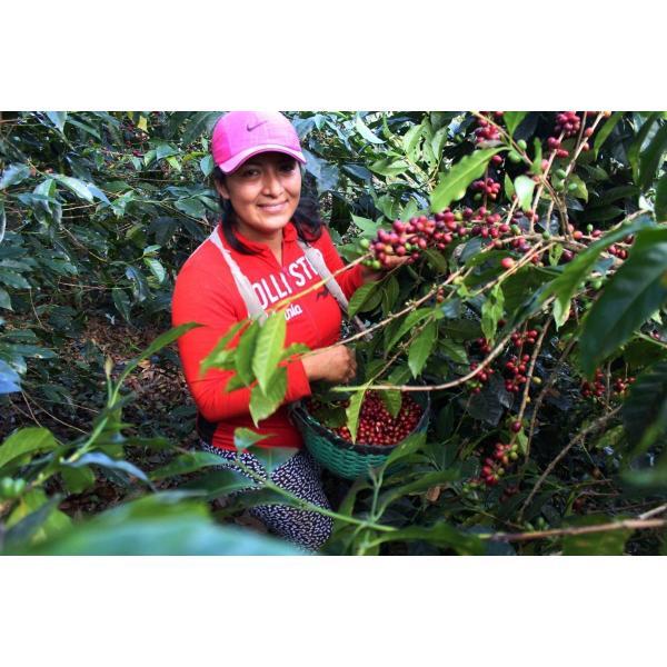 【今月の2割増量コーヒー豆】コーヒー豆 250g    ペルー  エルセドロ kyoto-coffee