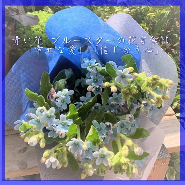 ブルースターの花束