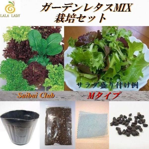 栽培クラブ ガーデンレタスミックス(5種類)栽培セット Mサイズ 種 野菜 ベジタブル サラダ|lalalady-shop