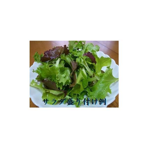 栽培クラブ ガーデンレタスミックス(5種類)栽培セット Mサイズ 種 野菜 ベジタブル サラダ|lalalady-shop|05