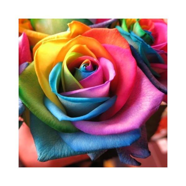 レインボーローズ 花束 フラワーギフト 10本使用 生花使用