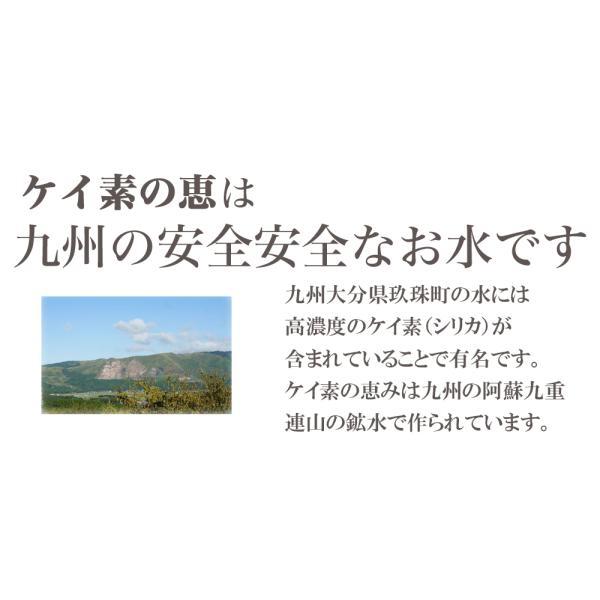 シリカ水 500ml 48本 ケイ素水 ケイ素の恵 高濃度シリカ水 ミネラルウォーター ケイ素水 天然水 軟水 シリカウォーター 水 大分県産 国産|lemonno-ki|05