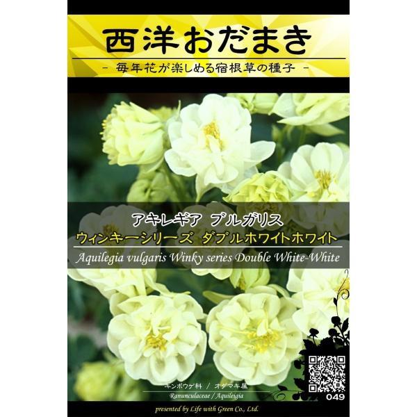 宿根草種子 アキレギア ウィンキーシリーズ ダブルホワイトホワイト ×3袋【送料無料】 [Life with Green] life-with-green