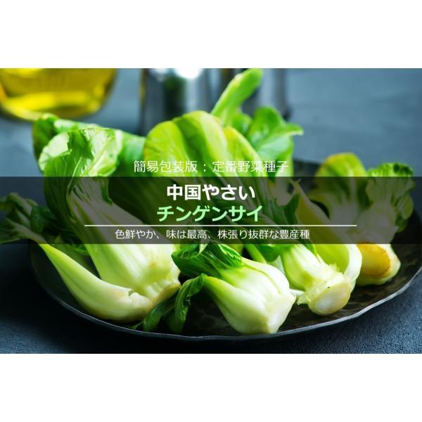 簡易包装版 定番野菜種子 中国やさい チンゲンサイ [秋][直売限定][大国屋種苗xLife with Green] life-with-green