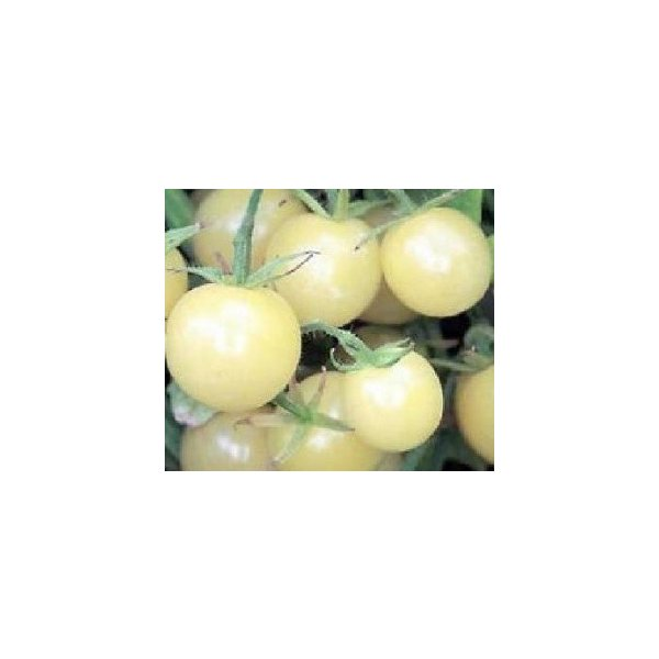超甘い アイススノー ミニトマト 6粒|luckyseed