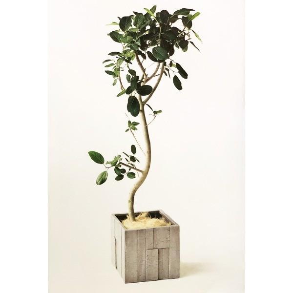 ファイバークレイ製 軽量 大型植木鉢 パターン キューブ ホワイトグレーウッド 44cm|luckytail|03