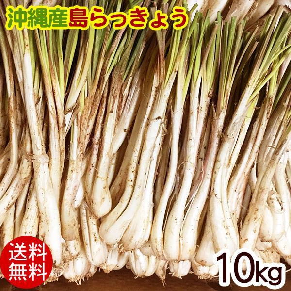 島らっきょう 沖縄産 (生)10kg
