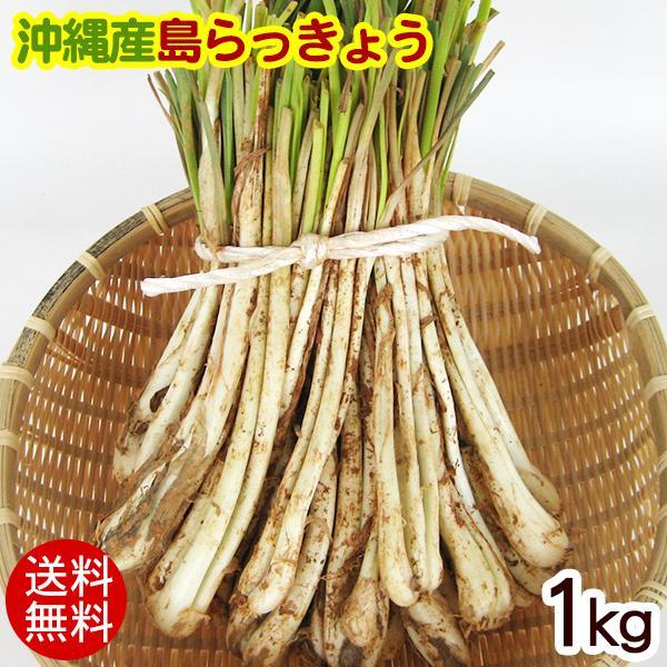 伊江島の島らっきょう 沖縄産(生)1kg