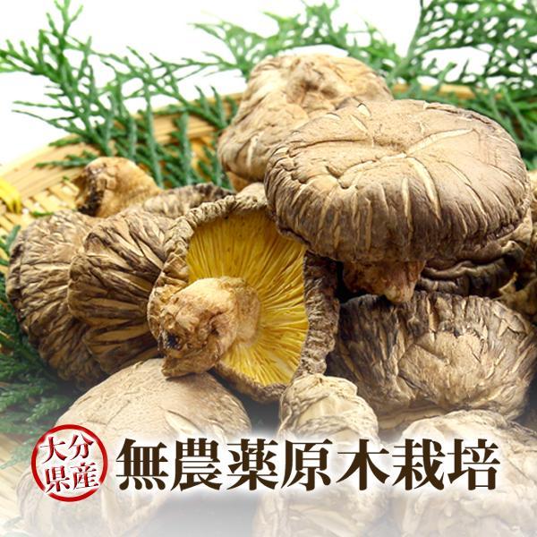 干し椎茸 乾燥椎茸 こうこ 80g 九州大分県産 国産 しいたけ シイタケ 原木栽培 乾燥野菜
