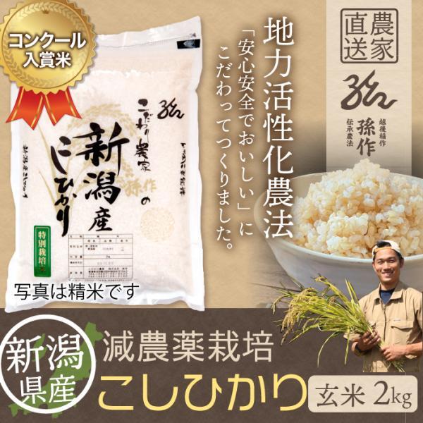 新米 特別栽培米 コシヒカリ 玄米 2Kg 新潟県産 こしひかり 減農薬米|magosaku-food