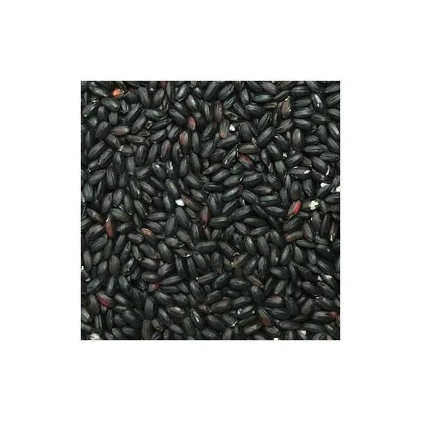 令和3年産 黒米 秋田県/山梨県産 10kg 予約販売