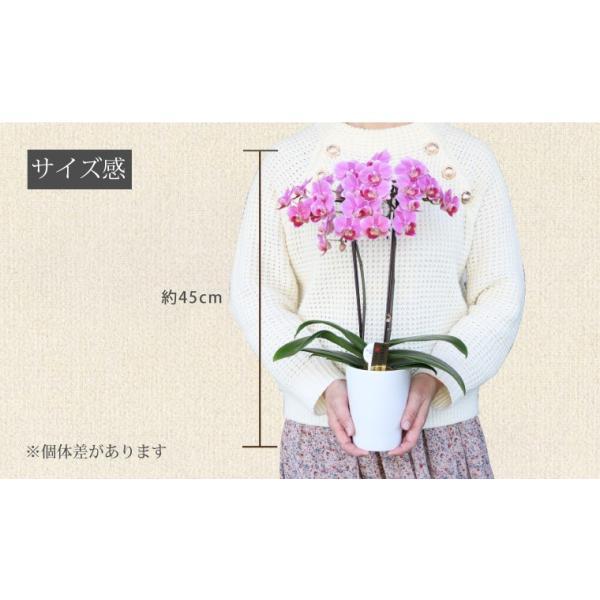 父の日『選べるミディ胡蝶蘭』花鉢 送料無料 豪華 コチョウラン 花 ギフト プレゼント|marika|10