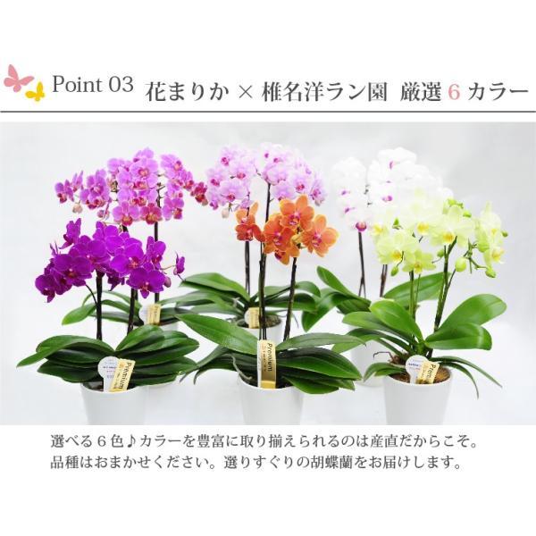 父の日『選べるミディ胡蝶蘭』花鉢 送料無料 豪華 コチョウラン 花 ギフト プレゼント|marika|03