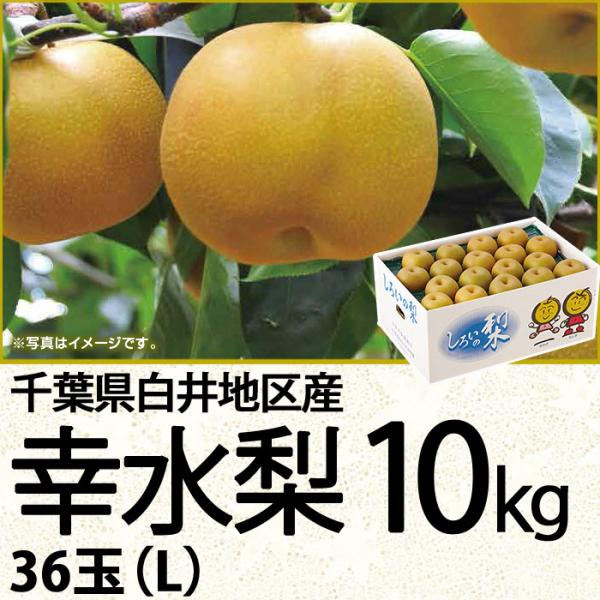 千葉県産幸水梨 幸水梨10kg 36玉(L)(220_20梨)