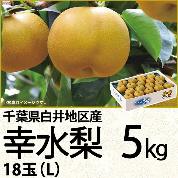 千葉県産幸水梨 幸水梨5kg 18玉(L)(220_20梨)