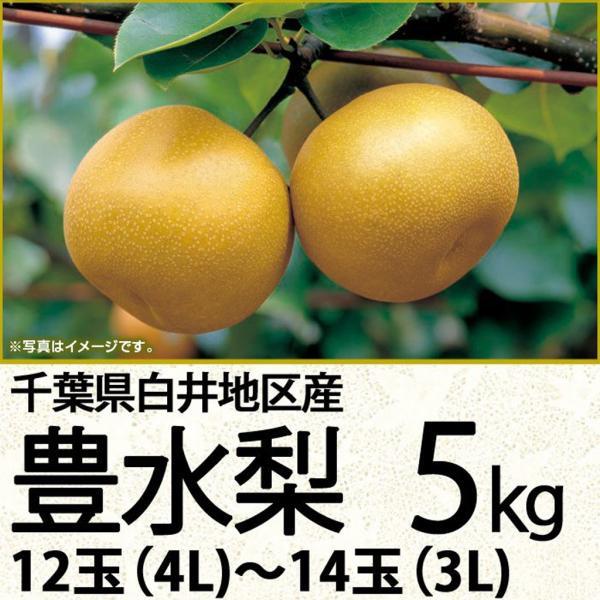 千葉県産豊水梨 豊水梨5kg 12玉(4L)〜14玉(3L)(220_20梨)