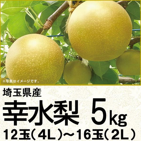 埼玉県産幸水梨 幸水梨5kg 14玉(3L)〜16玉(2L)(220_20梨)