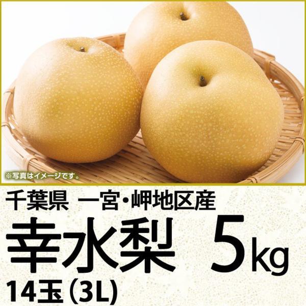 千葉県産梨幸水 幸水梨5kg 14玉(3L)(220_20梨)