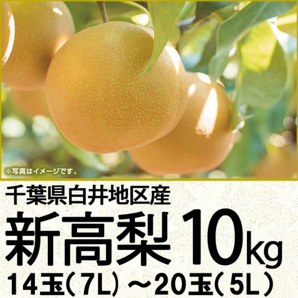 千葉県産 新高梨10kg 14玉(8L)〜20玉(5L)(220_20梨)