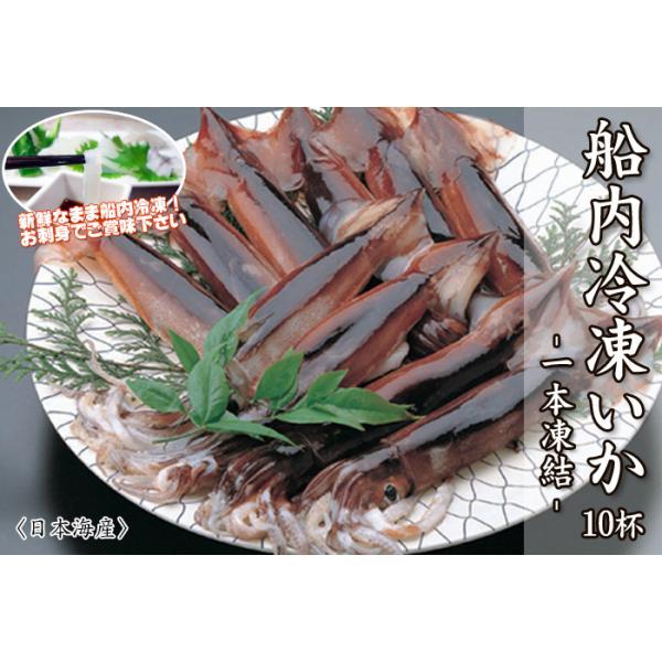 お刺身用烏賊 船内冷凍いか (スルメイカ) 10杯 1本凍結 <日本海産>