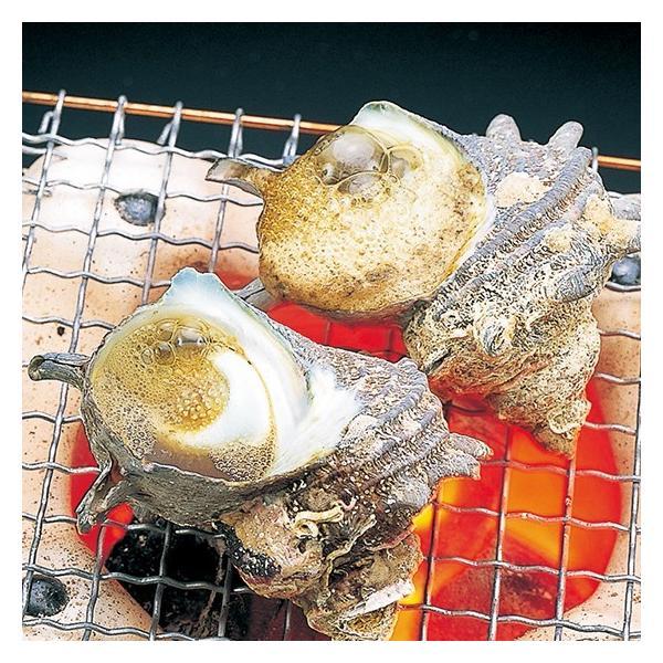 活えぞあわび養殖・活ざざえ各5個入〔海水入・酸素入〕〔送料無料〕9種類のカラーレシピ&保存方法付なのでご家庭で料理できますよ それに100%活きたまま|marukatsu-onjuku11|06