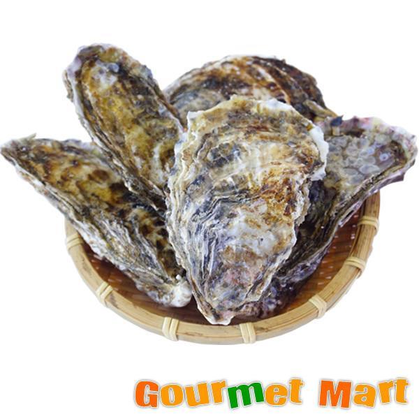 マルえもん[Lサイズ]20個セット 北海道産 牡蠣 カキ 殻付き 生食 敬老の日 ギフト 送料無料