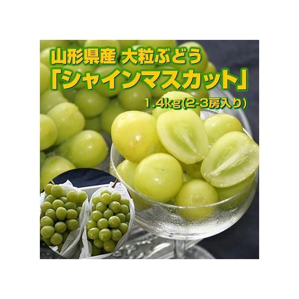 送料無料 山形県産 シャインマスカット 1.4kg(2-3房) マスカット 葡萄 種なし ギフト ぶどう