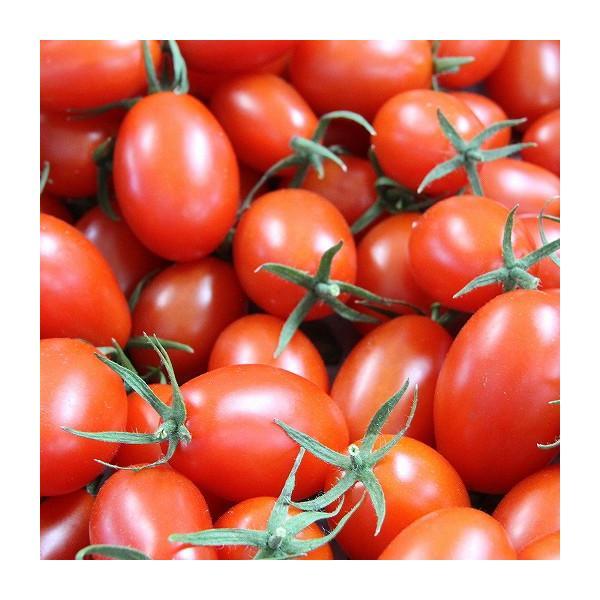 『天使の甘雫』 高糖度 アイコトマト 150g×5パック 山梨県産|marunou|02