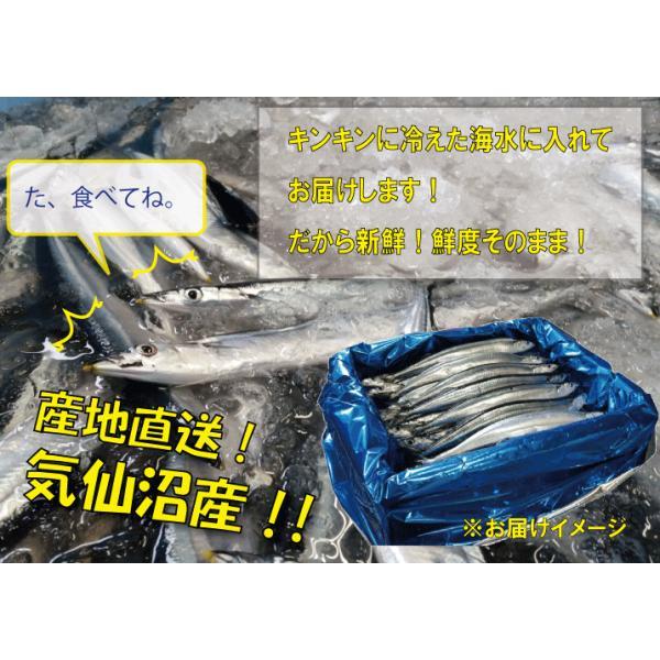 鮮サンマ 30尾 130g以上 秋刀魚 秋の味覚 丸繁 marushige-mekabu 02